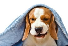 A sick dog needs medicine